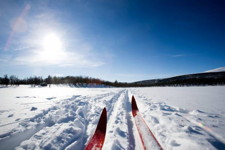 Cross-Country Skis in Snow